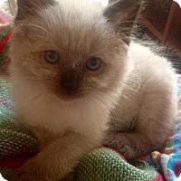 Adopt A Pet :: Charlie - Pleasant Hill, CA