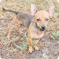 Adopt A Pet :: Padre - Umatilla, FL