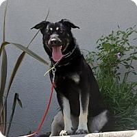 Adopt A Pet :: Sam - Mira Loma, CA