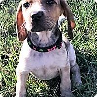 Adopt A Pet :: Charlene - Holly Springs, NC