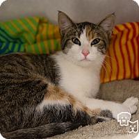 Adopt A Pet :: Kimber - Stillwater, OK