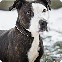 Adopt A Pet :: Christina - Urgent! - Zanesville, OH