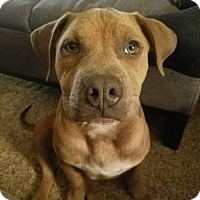 Adopt A Pet :: Ducky - Eugene, OR