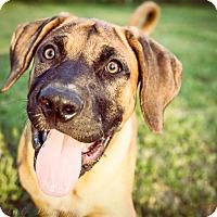 Adopt A Pet :: Ruby(Purple)-FL - Virginia Beach, VA