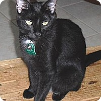 Adopt A Pet :: Hollie - Homosassa, FL