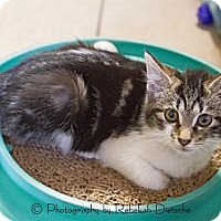 Adopt A Pet :: Darby - Byron Center, MI