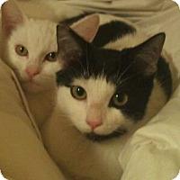 Adopt A Pet :: Polka-dot - Modesto, CA