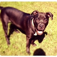 Adopt A Pet :: Bandit - Bridgewater, NJ