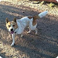 Adopt A Pet :: Gatlin - Phoenix, AZ