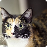 Adopt A Pet :: Widget - Chicago, IL