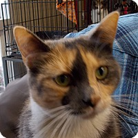 Adopt A Pet :: Carly - Middletown, NY
