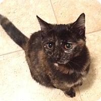 Adopt A Pet :: Cleo - Horsham, PA