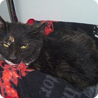 Adopt A Pet :: KYRA - Medford, WI