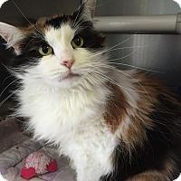 Adopt A Pet :: Maddie - Topeka, KS