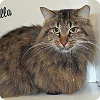 Adopt A Pet :: Rosabella - Ridgeland, SC