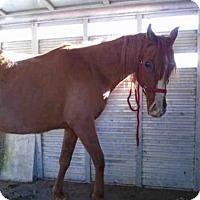 Adopt A Pet :: A073533 - McKinleyville, CA