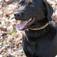 Adopt A Pet :: Trapper - Lewisville, IN