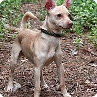 Adopt A Pet :: Buddy - Kittery, ME