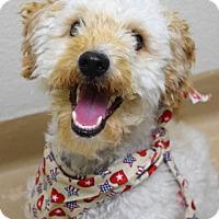 Adopt A Pet :: Oliver - Dublin, CA