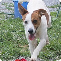 Adopt A Pet :: Sally - Mt Sterling, KY