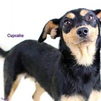 Adopt A Pet :: Cupcake - Bloomington, MN