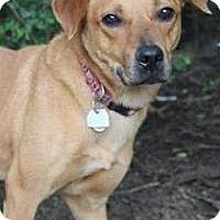 Adopt A Pet :: Edison - Yukon, OK