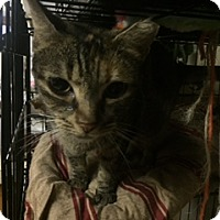 Adopt A Pet :: Princess - Forest Hills, NY
