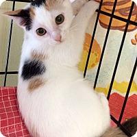 Adopt A Pet :: Cali #2 - Lunenburg, MA