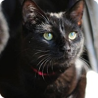 Adopt A Pet :: Mariska D - Raleigh, NC