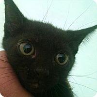 Adopt A Pet :: Lisa - Savannah, GA
