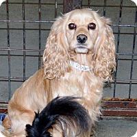 Adopt A Pet :: Daisy - San Jacinto, CA