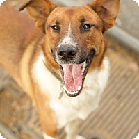 Adopt A Pet :: Maverick - Harrisonburg, VA