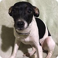 Adopt A Pet :: Trixie - Metairie, LA