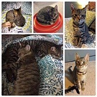 Adopt A Pet :: Max and Ruby (courtesy post) - Spring Grove, PA