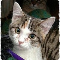 Adopt A Pet :: 6 - Pueblo West, CO
