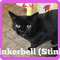 Adopt A Pet :: Tinkerbell (Courtesy Listing) - Valley City, ND