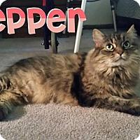 Adopt A Pet :: Pepper - Trevose, PA