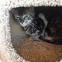 Adopt A Pet :: Leonard - Freeport, NY