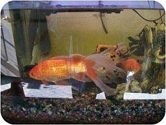 Fish for adoption in North Pole, Alaska - Gator