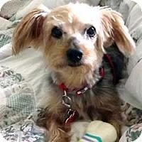 Adopt A Pet :: Lexie - Miami, FL