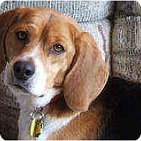 Adopt A Pet :: Diesel - Novi, MI