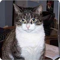 Adopt A Pet :: Lulu FeLV positve - Secaucus, NJ