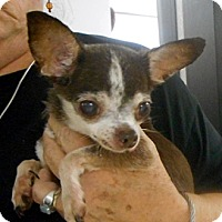 Adopt A Pet :: Bridgett - baltimore, MD