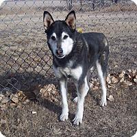 Adopt A Pet :: Loki - Greeley, CO
