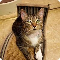 Adopt A Pet :: Lori - St. Charles, MO