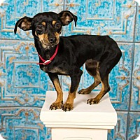 Adopt A Pet :: Dolly - Great Bend, KS