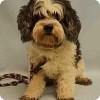 Adopt A Pet :: Quimby - Bernardston, MA