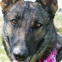 Adopt A Pet :: Reina - Patterson, CA