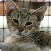 Adopt A Pet :: Irving - Medina, OH