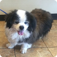 Adopt A Pet :: Panda - Oak Ridge, NJ